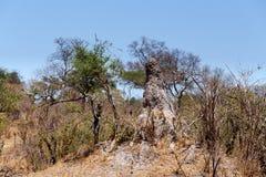 krajobraz afryki Zdjęcia Royalty Free