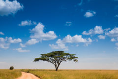 krajobraz afryki Zdjęcie Royalty Free