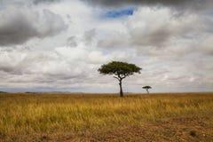 krajobraz afryki Fotografia Stock