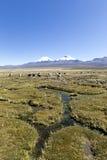 Krajobraz Andes góry z lam pasać, Fotografia Stock