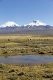 Krajobraz Andes góry z lam pasać, Obrazy Stock