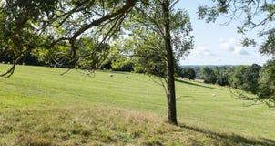 krajobraz anglikiem zdjęcie stock