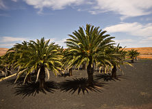 Krajobraz Antigua Obraz Royalty Free
