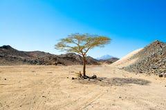 Krajobraz Arabska pustynia Obrazy Royalty Free