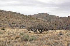 Krajobraz Arizona usa Zdjęcie Stock