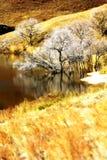 Krajobraz Bashang obszary trawiaści obraz stock