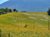 Krajobraz blisko Ascoli Piceno przy latem Obraz Stock