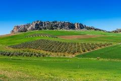 Krajobraz blisko Cuevas Del Becerro w gubernialnym Malaga, Andalusia, Hiszpania zdjęcia stock