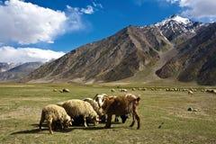 Krajobraz blisko Rangdum monasteru, Zanskar doliny, Ladakh, Jammu i Kaszmir, India Obraz Stock