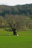 Krajobraz, Chatsworth park, nr Rzeczny Derwent, Szczytowy okręg, Derbyshire, Obrazy Royalty Free