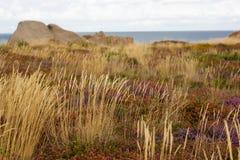 Krajobraz Cote De Granit Wzrastający w Bretagne, Francja zdjęcia royalty free