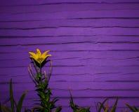 Krajobraz dla tła blisko drewnianej ściany z lelują Tło Zdjęcie Royalty Free