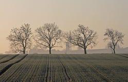 Krajobraz drzewa na mroźnym wczesnym zima ranku Zdjęcia Royalty Free
