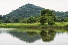 krajobraz drzewo i odbicie na wodzie zdjęcia royalty free