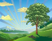 Krajobraz - drzewo na wzgórzu 21 05 Obrazy Royalty Free