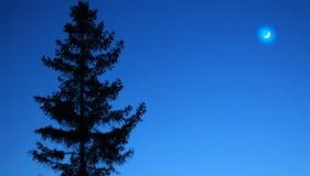 Krajobraz, drzewo przeciw nocnemu niebu Natury nocy park outdoors Księżyc na błękitnym nocnym niebie Wiosny nocne niebo z drzewem zdjęcie royalty free