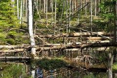 Krajobraz dziki bagno las Obrazy Royalty Free