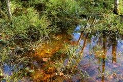 Krajobraz dziki bagno las Zdjęcia Stock