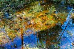 Krajobraz dziki bagno las Zdjęcie Royalty Free