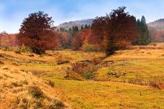 Krajobraz halna jesień z kolorowego i mgły lasem Zdjęcie Royalty Free