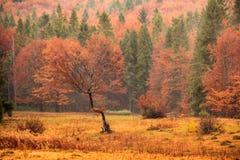 Krajobraz halna jesień z kolorowego i mgły lasem Zdjęcia Stock