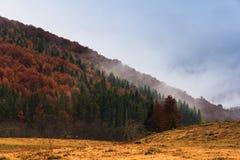 Krajobraz halna jesień z kolorowego i mgły lasem Obraz Stock