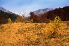 Krajobraz halna jesień z kolorowego i mgły lasem Obrazy Royalty Free