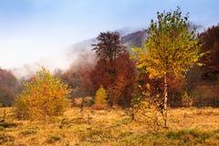 Krajobraz halna jesień z kolorowego i mgły lasem Zdjęcia Royalty Free