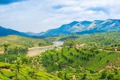 Krajobraz herbaciane plantacje, góra i rzeka, Obrazy Royalty Free