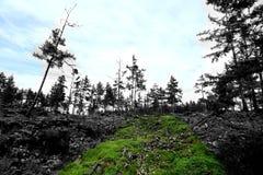 Krajobraz Hulunbuir obszary trawiaści Zdjęcia Stock