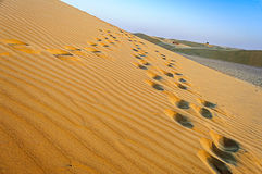 Krajobraz indianina Thar pustynia z kopii przestrzenią Fotografia Stock