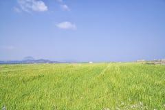 Krajobraz jęczmienia pole z Sanbangsan i Songaksan Obraz Royalty Free