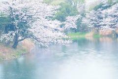 Krajobraz Japońscy Biali Czereśniowi okwitnięcia wokoło stawu nawadnia Zdjęcie Royalty Free