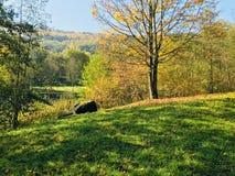 Krajobraz jesień park z niebieskim niebem zdjęcia stock