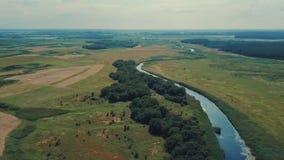 Krajobraz jezioro blisko w lesie i rzece zbiory wideo