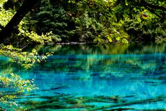 Krajobraz jezioro i drzewa Zdjęcie Stock