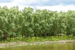 Krajobraz jezioro i drzewa Obraz Royalty Free