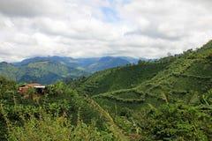 Krajobraz kawowe i bananowe rośliny w kawowym narastającym regionie blisko El Jardin, Antioquia, Kolumbia obrazy stock