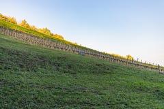 Krajobraz kolorowy winnica na pięknym jesień dniu zdjęcie stock