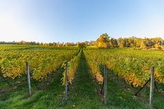 Krajobraz kolorowy winnica na pięknym jesień dniu obrazy stock