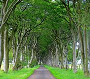 krajobraz korytarz drzewa obraz royalty free