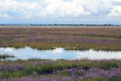 Krajobraz laguna Wenecja w LIO fleciku i MESOLE Zdjęcia Royalty Free
