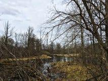 Krajobraz lasowi bagna i susi drzewa w dżdżystej pogodzie Obrazy Stock
