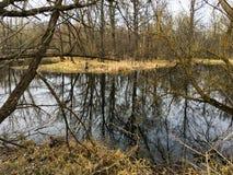Krajobraz lasowi bagna i susi drzewa w dżdżystej pogodzie Obraz Royalty Free