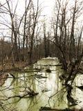 Krajobraz lasowi bagna i susi drzewa w dżdżystej pogodzie Zdjęcia Stock