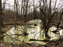 Krajobraz lasowi bagna i susi drzewa w dżdżystej pogodzie Zdjęcie Royalty Free