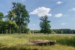 Krajobraz, lato dębu gaj obraz royalty free