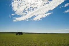 Krajobraz, losu angeles Pampa, Argentyna zdjęcie stock