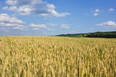 Krajobraz Medjimurje, Chorwacja Zdjęcie Royalty Free