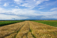 Krajobraz Medjimurje, Chorwacja Fotografia Royalty Free